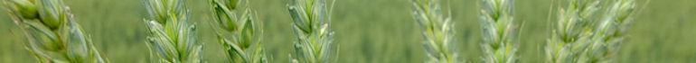 Ирландская компания приобрела поставщика семян «Агроскоп Украина»