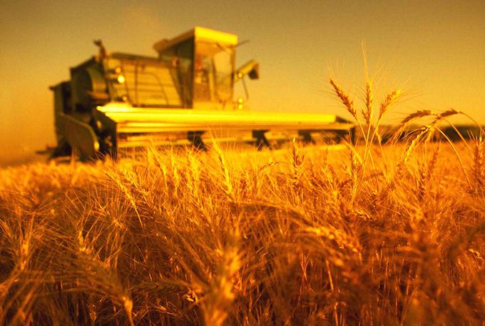 Украинские компании имеют право экспорт крымского зерна