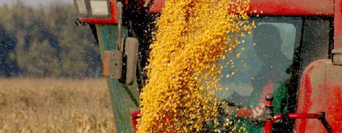 Экспорт зерноторговых компаний составил почти 6,5 миллионов тонн зерна