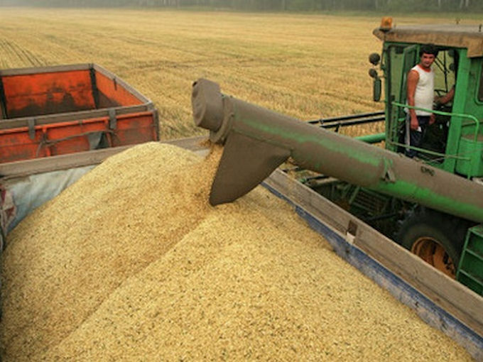 Украинские аграрии добыли более 45-ти миллионов тонн зерна