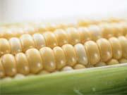 В Южную Корею будет экспортировано более 100 тысяч тонн украинской кукурузы