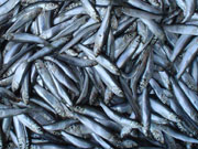 Норвегия импортировала в Украину рыбу на общую стоимость 159 млн. долларов