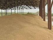 Украина будет поставлять хлебные злаки в Бангладеш