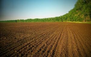 Каждый владелец земельного пая в Украине заплатит 1700 грн штрафа