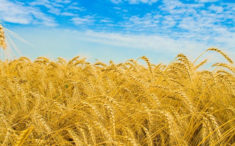 В прошлом году Украина собрала рекордный урожай зерна