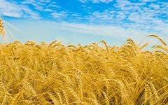 В ноябре индекс затрат на сельскохозяйственную продукцию составил 105,2%