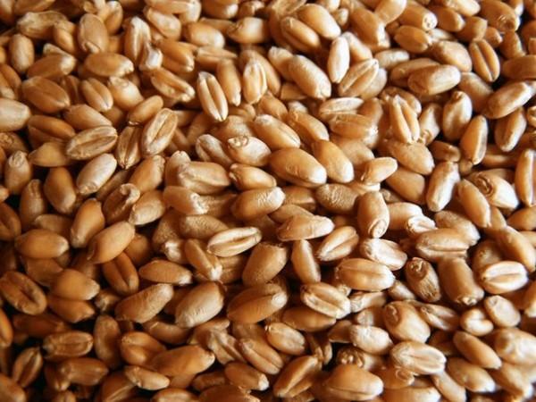 «Кернел» увеличил продажи зерна до рекордного уровня