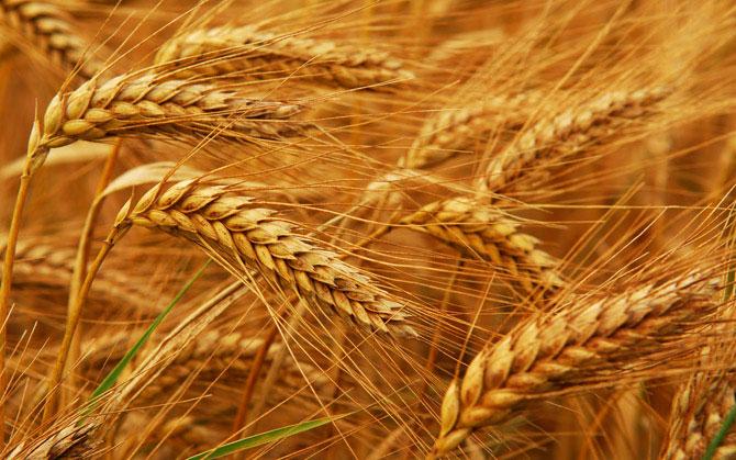 Министр аграрной политики обсудил с главой НБУ условия кредитования аграриев в 2015 году