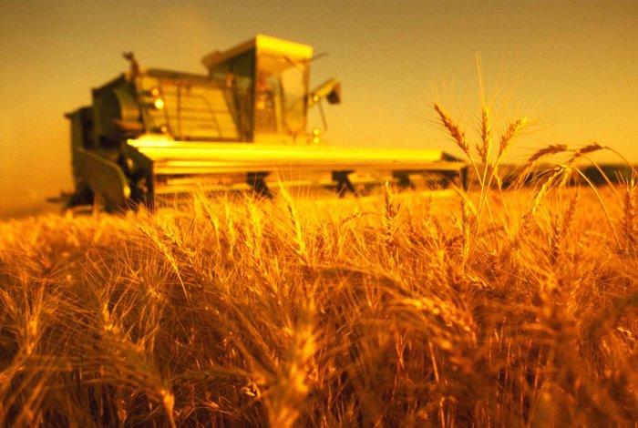 На рассмотрение внесен законопроект, предлагающий возобновление возмещения НДС при экспорте зерна