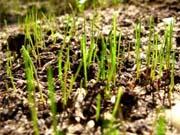 Аграрная биржа за 850 тысяч гривен будет торговать столичной землей
