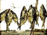 Любительский вылов рыбы в Украине может стать платным
