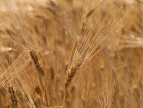 В Крыму взлетели цены на сельхозпродукцию