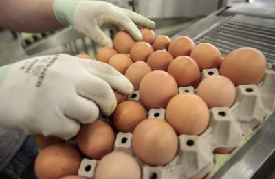 В Украине резко сокращается производство яиц