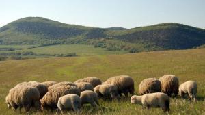 Аграрный сектор Крыма продолжает вымирать