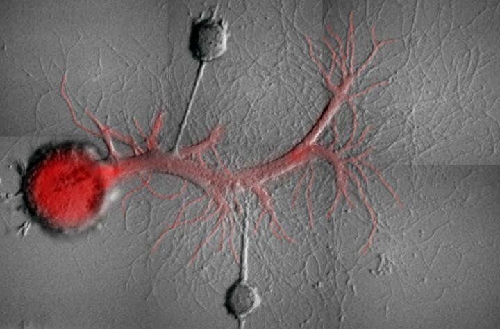 Ученые впервые научились выборочно стирать воспоминания