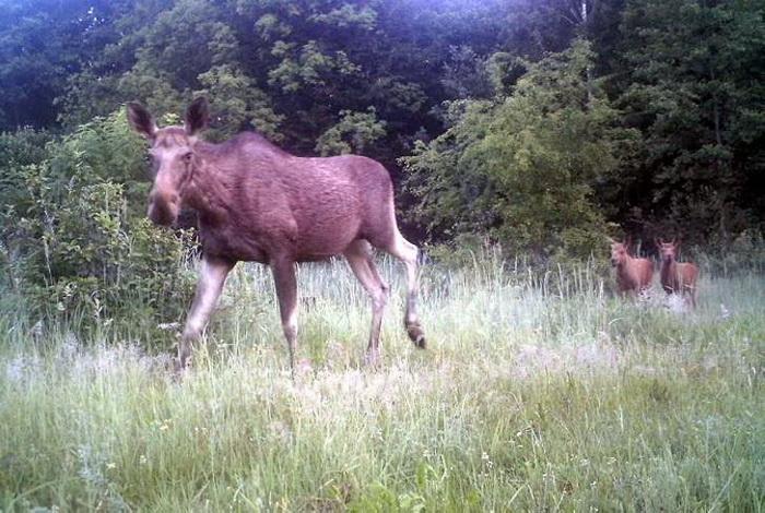 Природа Чернобыля: что стало с флорой и фауной через 30 лет после катастрофы