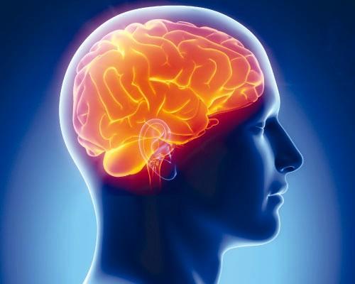 Мозг мужчин не любит многозадачности – врачи