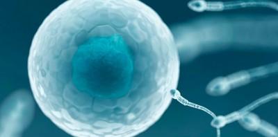 Через 20-30 лет в США перестанут использовать секс для размножения – исследование Стенфорда