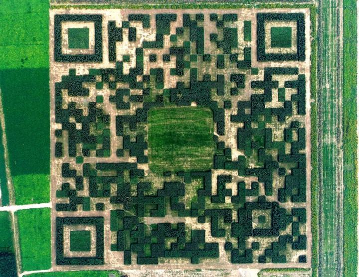 Китайская деревня построила гигантский «живой» QR-код (фото)