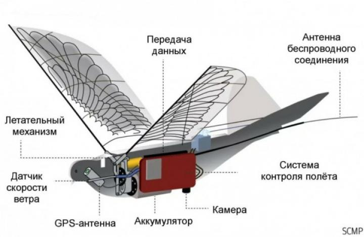 В Китае создали дрон-шпион, похожий на голубя (фото)