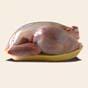 Производство курятины в Украине уже 10 лет не приносит убытков