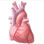 Американский стартап напечатал часть сердечной мышцы для трансплантации