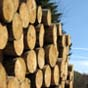 Контрабанда леса: Гройсман говорит, что обнародуют «интересные фамилии»