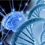В мозге человека нашли неизвестный ранее микробиом