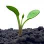 В Кабмине назвали главный источник роста экономики