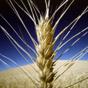 Украина в 20 раз увеличила экспорт зерновых в Китай