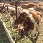 Украина упрощает правила ввоза животных