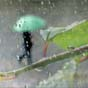 Дождь может стать эффективным источником возобновляемой энергии (видео)