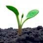 Кабмин с 17 ноября разрешил передачу сельхозземель в коммунальную собственность