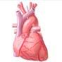 Philips купит производителя оборудования для диагностики сердечных заболеваний за $2,8 млрд
