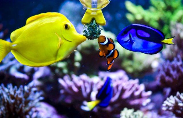 Морские рыбы для аквариума